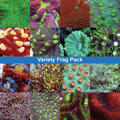 variety-frag-pack