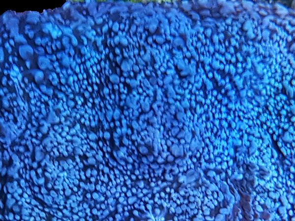 My Baby Bluez Chalice